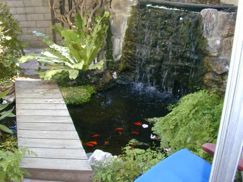 Mclaughlin 39 s pond for Balcony koi pond
